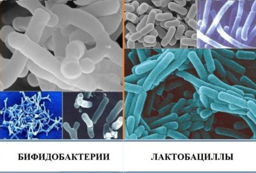 сравнение бактерий