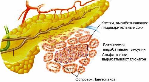 ферменты поджелудочной железы