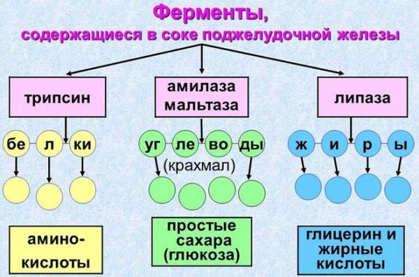 схема ферментов