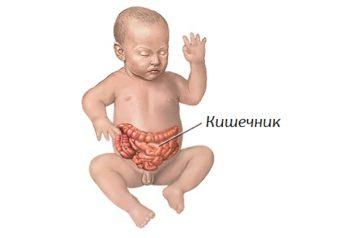 кишечник грудничка