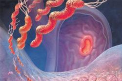 микробы в желудке