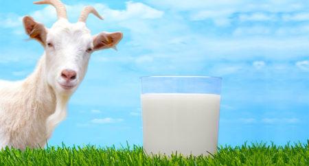 молоко и коза