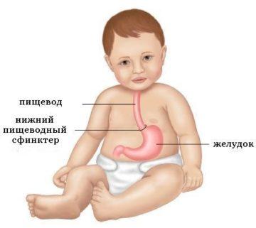 пищевод у ребенка