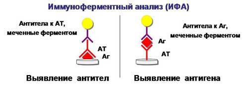 принцип ИФА