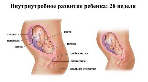 28 неделя развития ребенка