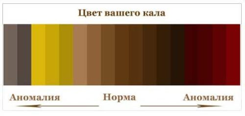 нормальный цвет кала