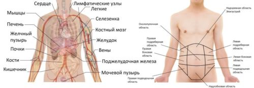 области живота