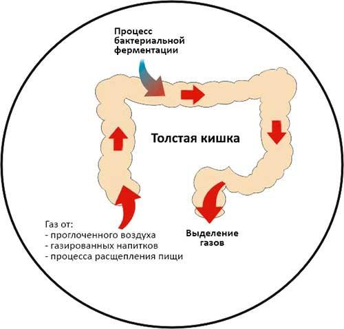попадание воздуха в кишечник