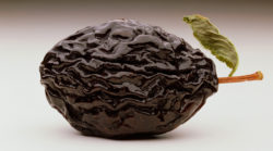 Wrinkled Prune --- Image by © Chris Collins/CORBIS